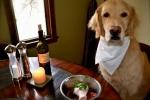 Что нельзя давать собаке?